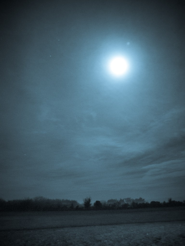Moonlight-nocturnal in rural Canterbury.